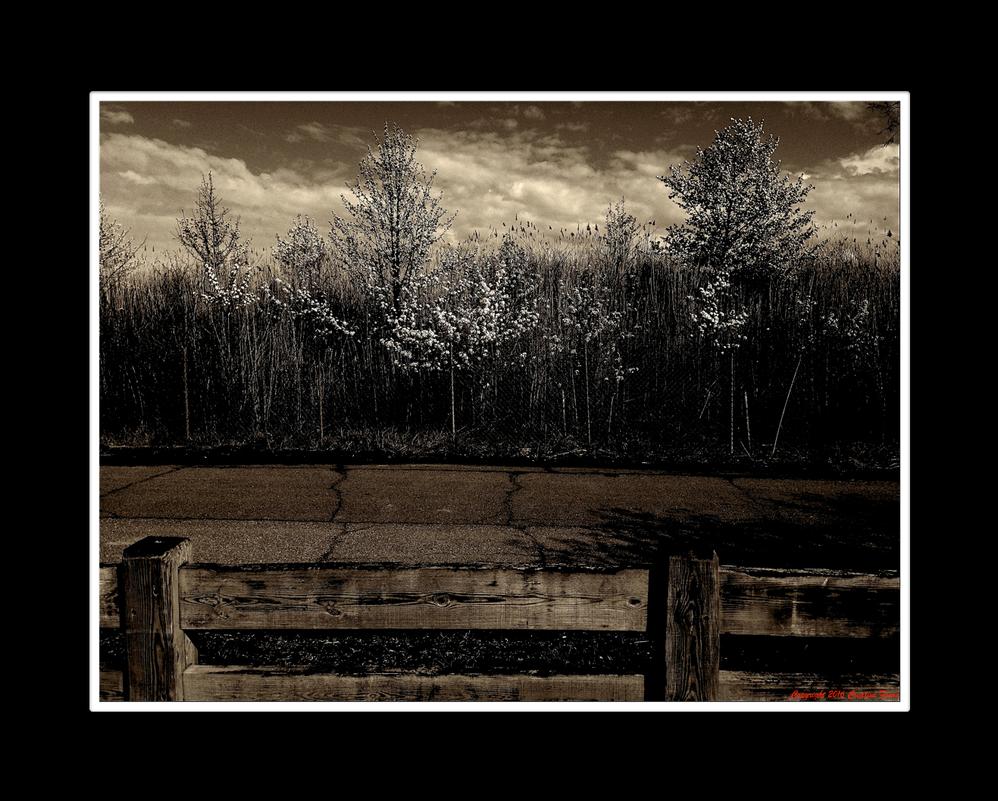 When Roads End Blossoms Begin by Trippy4U