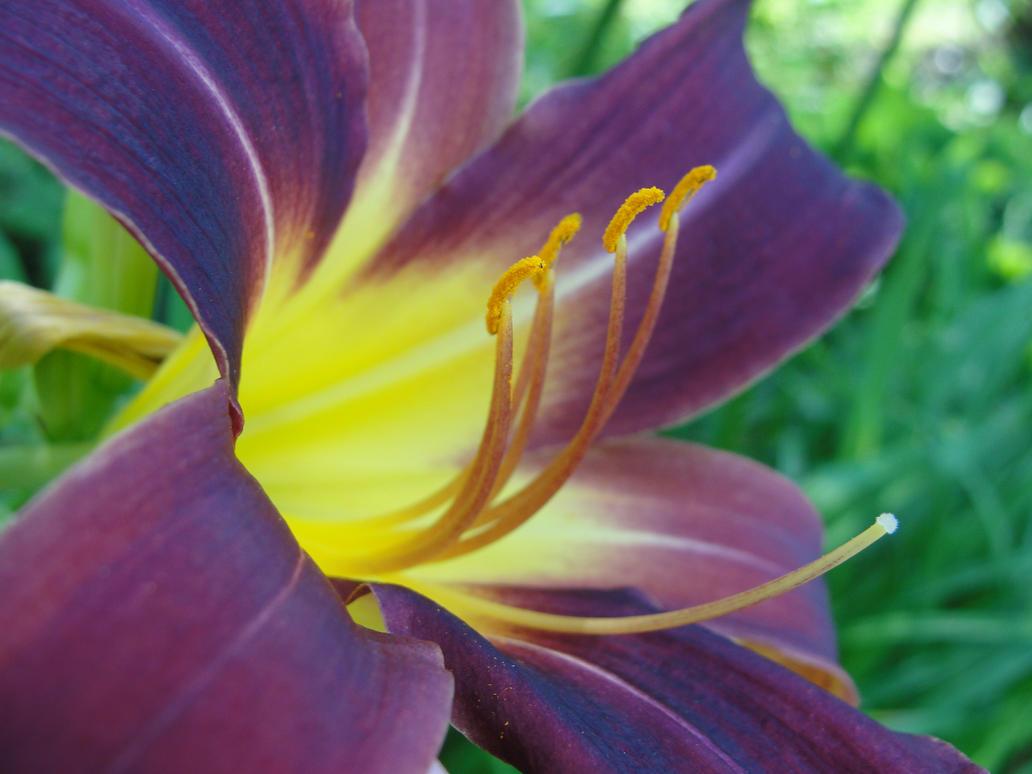 Purple and Yellow Flower by LiviaZita on DeviantArt