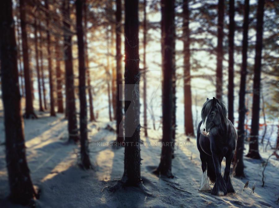 Rowena by kiltsrhott