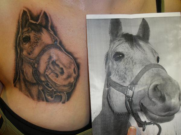 Horse on chest - chest tattoo
