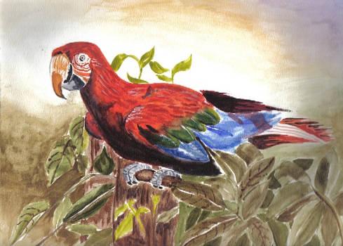 copy of parrot watercolor