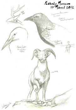 Peabody Museum Sketches