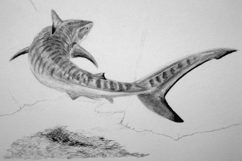 Encounters - WIP - Tiger Shark by Luthrai