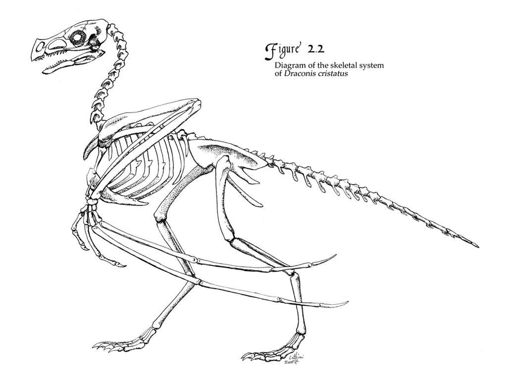 Eagle Skeleton Diagram 2018 Images Pictures Bald Along With Golden Related Keywords D Cristatus Skeletal System