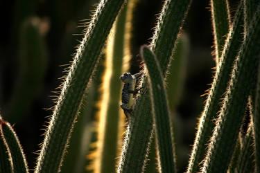 Cacti Climber