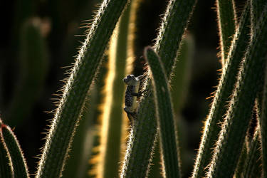Cacti Climber by EisenFeuer