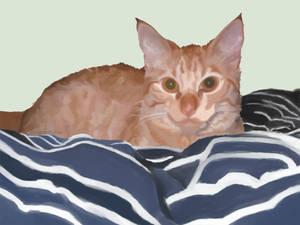 Fraidy Cat - Commission