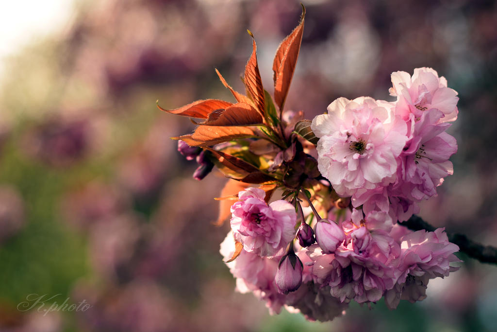 Springday by AntjeKoe