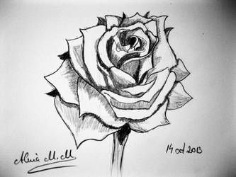Quick rose sketch