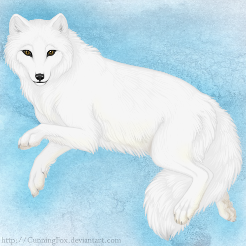 how to draw a simple arctic fox