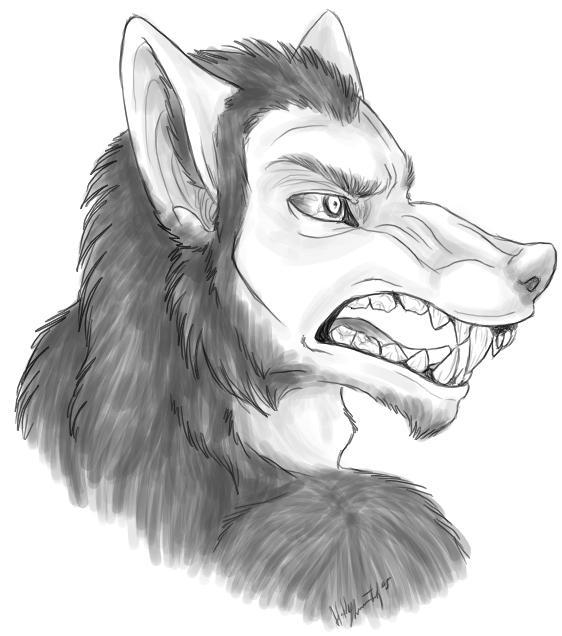 Werewolf TF By Bear-hybrid On DeviantArt
