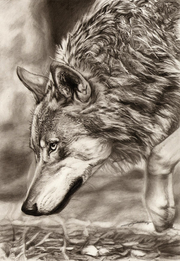 Prowling Wolf by AmBr0