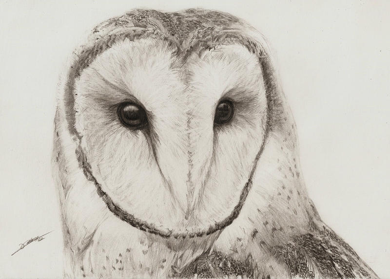 Barn Owl by AmBr0 on DeviantArt