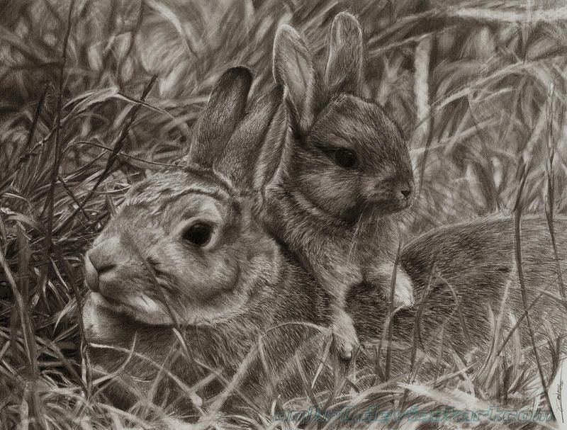Rabbits Drawing