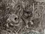 Rabbits Drawing by AmBr0