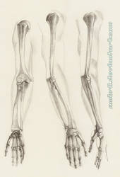 Arm Anatomy Study by AmBr0