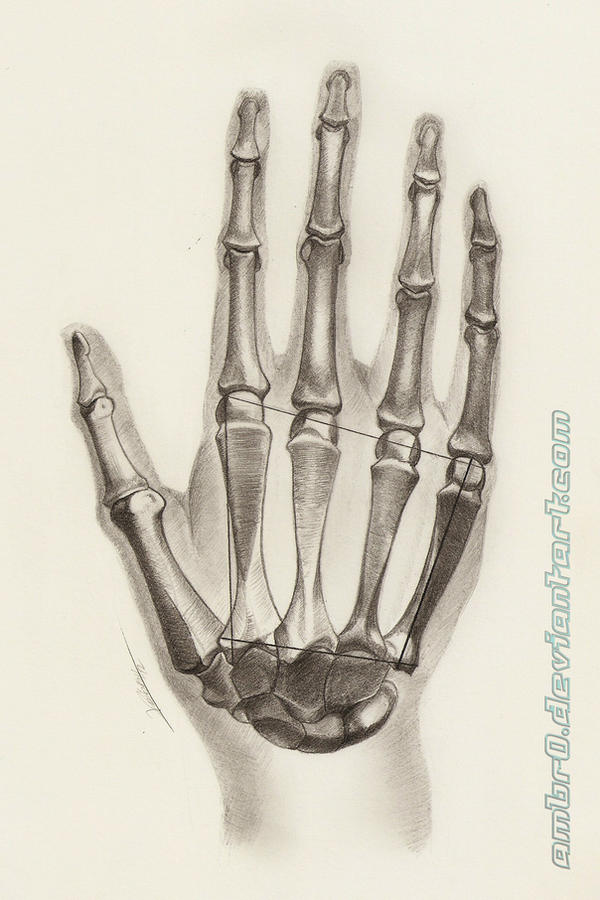 Hand Anatomy Study by AmBr0 on DeviantArt