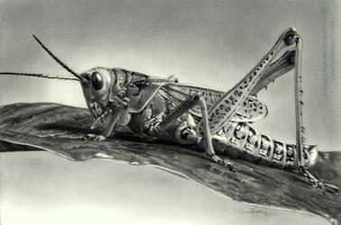 Grasshopper by AmBr0