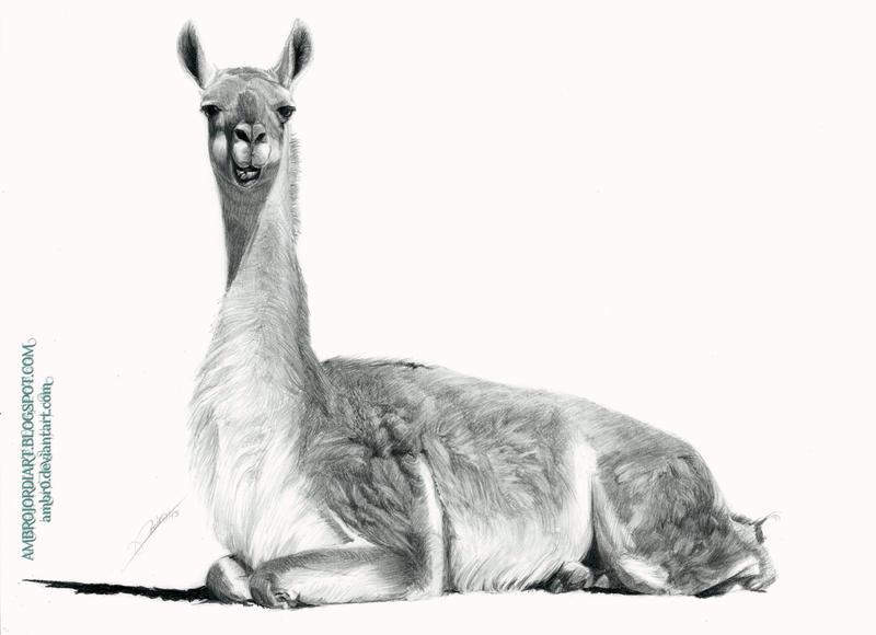 Llama by AmBr0