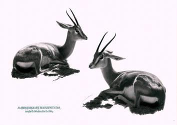 Gazelles by AmBr0