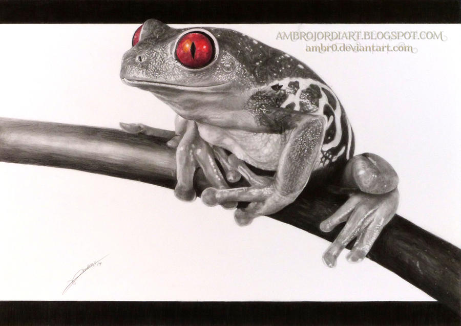 Realistic Tree Frog Drawings Red-Eyed Tree Frog by AmBr0