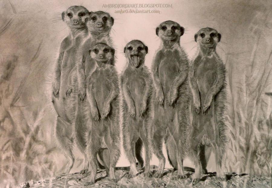 Meerkats life of pi - photo#37