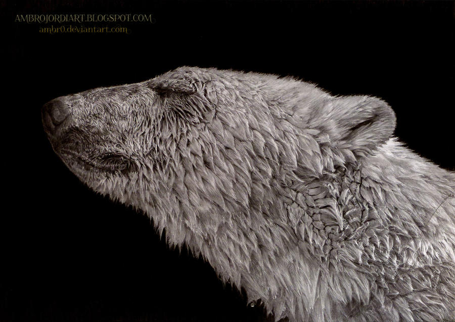 Polar Bear by AmBr0