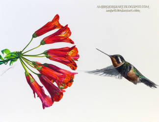 Hummingbird Flower by AmBr0