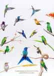 Hummingbirds by AmBr0