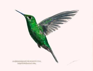 Hummingbird by AmBr0