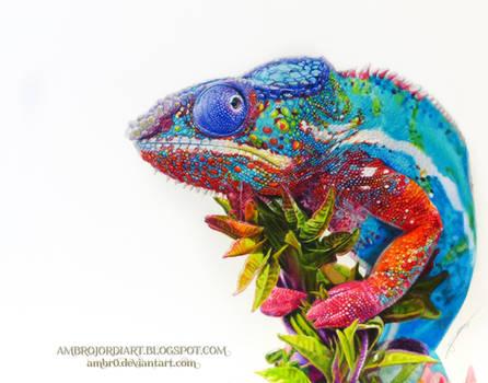 Chameleon Drawing