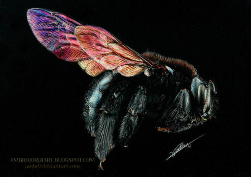 Carpenter Bee Drawing