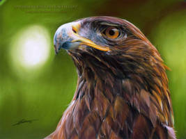 Golden Eagle by AmBr0