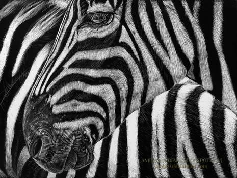 Zebra Scratchboard