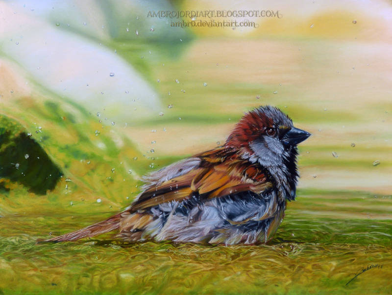 Sparrow drawing by AmBr0