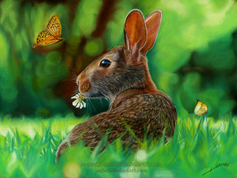 Rabbit and Butterflies Drawing