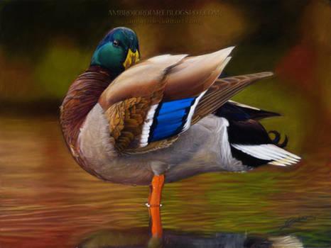 Malllard Duck Drawing