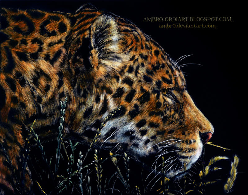 Leopard Scratchboard by AmBr0