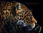Leopard Scratchboard
