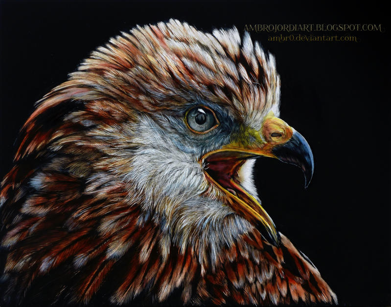 Red Kite Scratchboard by AmBr0
