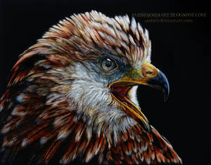 Red Kite Scratchboard