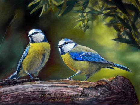 Blue Tits Drawing by AmBr0