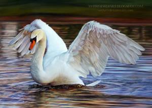 Swan Drawing