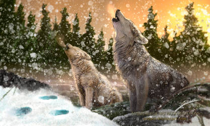 Wolves Drawing by AmBr0