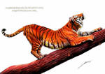 Tiger Stretching by AmBr0