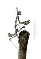 Mantis Drawing