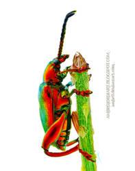 Jewel Beetle Drawing