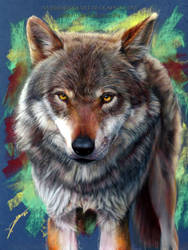 Wolf Drawing by AmBr0