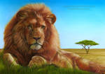 Lion Drawing by AmBr0