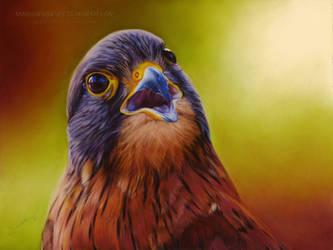 Falcon Drawing